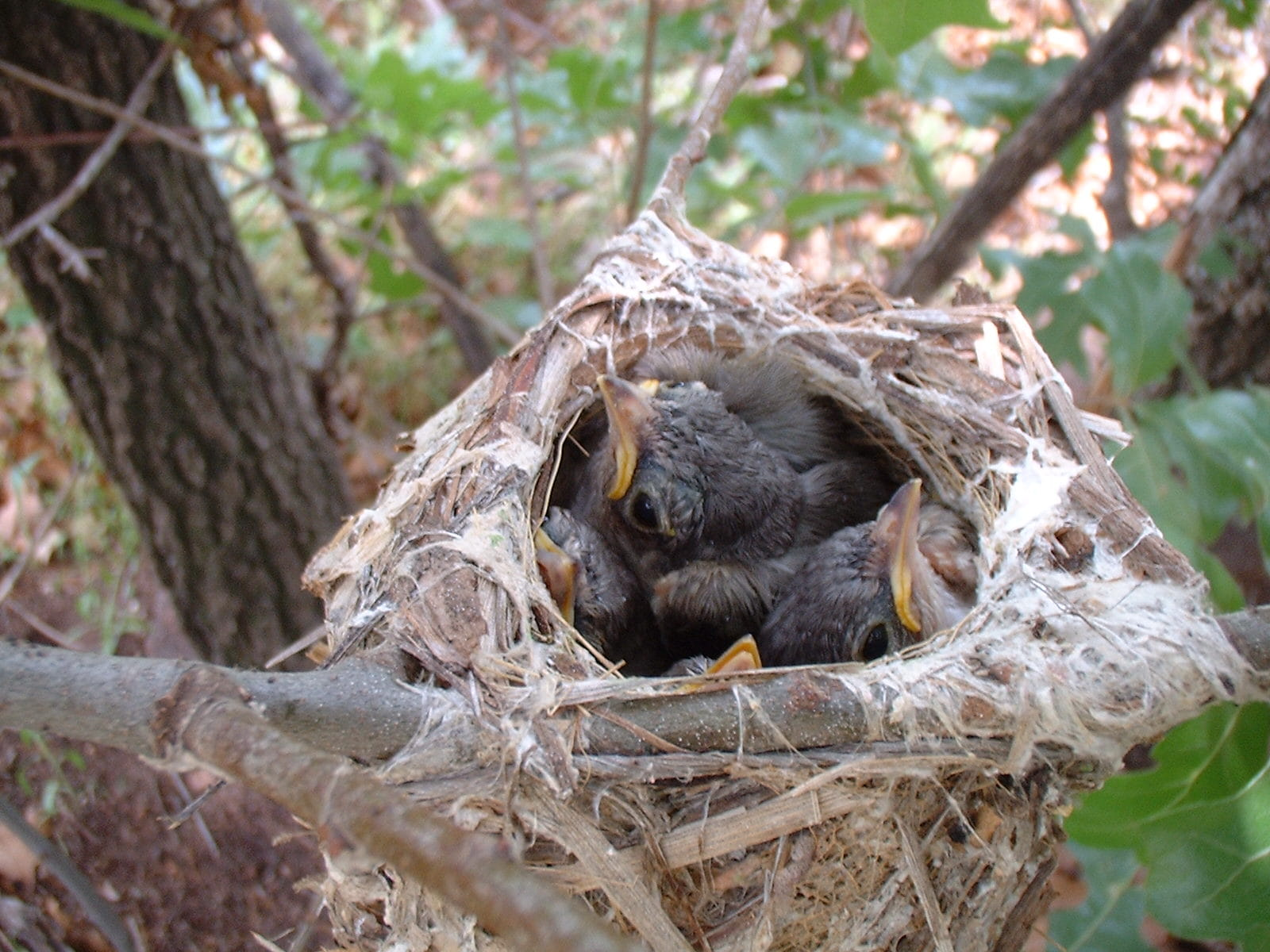 Wildlife, bird nest